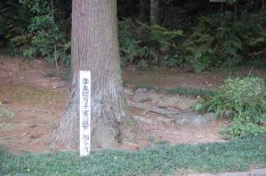 のむけはえぐすり  高麗神社のびっくり  2)李王妃方子女王殿下のお手植えの杉