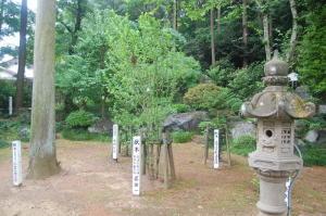 のむけはえぐすり  高麗神社のびっくり  1)植樹した人の名前が書かれた標識